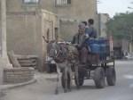 Cairo Ass